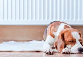11 recomandari pentru intretinerea unei centrale termice